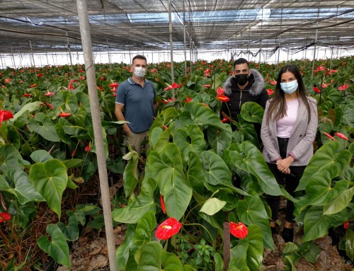 Proyecto Agrogoteras de Ataretaco, financiado por el Cabildo Insular